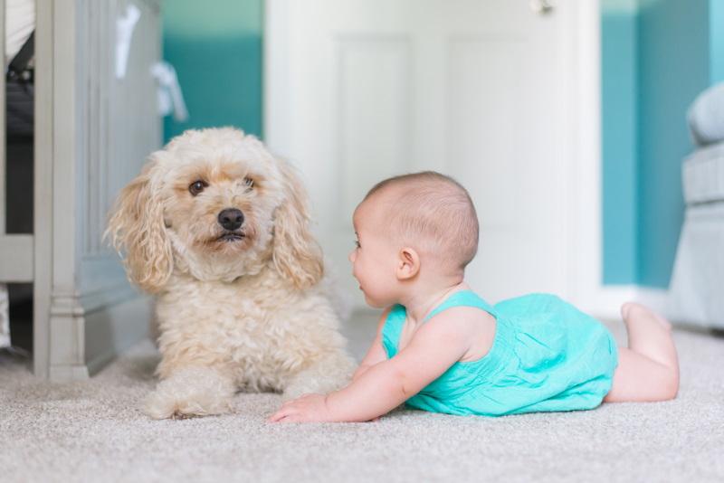 μωρό με σκυλί πάνω σε χαλί